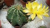 LAMINATED POSTER Flower Plant Nature Echinocereus Cactus Thorns Poster Print 24 x 36
