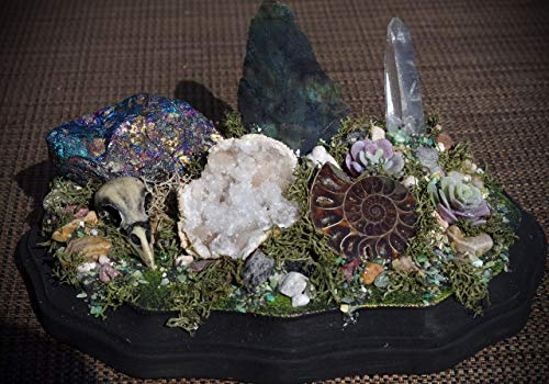 Medium Hand Made Bird Skull Succulent Earth Crystal Garden Display w/Chalcopyrite, Ammonite, Labradorite, Quartz