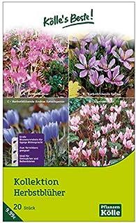 /'Edelweiss /& Enzian/' Samen-Geschenkset mit den beiden berühmtesten Alpenblumen