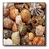 3dRose dpp_174399_3 Image of Shells from Sanibel Beaches-Wall Clock, 15 by 15-Inch Review