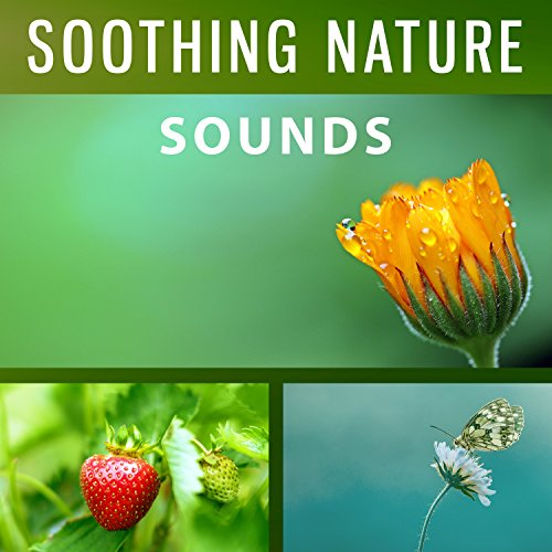 Soothing Nature Sounds - Forest Sounds, Walking Slow, Nature Waves, Ocean &  Sea Sounds