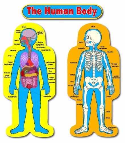 (Carson Dellosa Child-Size Human Body Bulletin Board Set (3215))