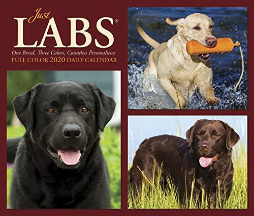 Just Labs - Just Labs 2020 Box Calendar (Dog Breed Calendar)