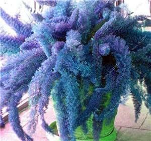 Promoción! 150 PC mezcladas Semillas cola de zorra flor, semilla Bonsai cola de zorra Ferns ornamental planta de la hierba Para Ornamental Planta decorativa 7