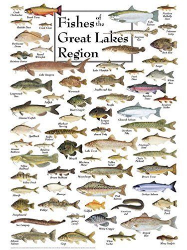 Lake Fish - Heritage Fish of the Great Lakes Region Jigsaw Puzzle - 550 Pieces