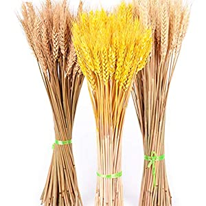 LOVESHI 50Pcs/Lot Real Wheat Ear Flower Natural Dried Flowers for Wedding Party Decoration DIY Craft Scrapbook Home Decor Wheat Bouquet 79