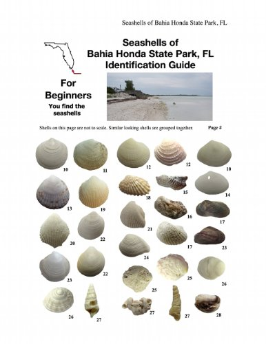 Seashells of Bahia Honda State Park, Fl Identification Guide (Beach by Beach Seashells, Bahia Honda, - Tide Low A Is What
