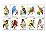 USPS Forever Stamps Songbirds Booklet of 20 (1, 20 stamps) Size: 20 stamps PackageQuantity: 1, Model: 689304, Toys & Play