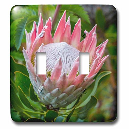 Garden Lighting Cape Town