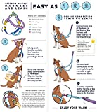 2 Hounds Design Freedom No Pull Dog Harness with