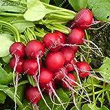 Pinkdose ZLKING Cherry Radish Vegetable Daucus Carota Delicious Sweet Vegetable 200 /Bag Bonsai