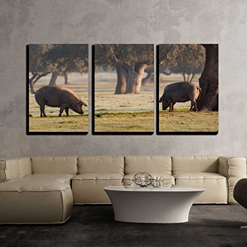 wall26 - 3 Piece Canvas Wall Art - Iberian Pigs Grazing in the Extremadura Landscape in Spain - Modern Home Decor Stretched and Framed Ready to Hang - 16''x24''x3 Panels by wall26