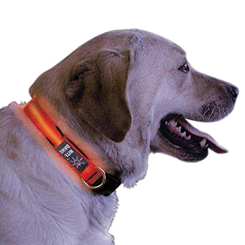 Nite Ize Nite Dawg Light Up Dog Collar Red LED Red Webbing, Small