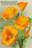 Bodega Bay, California - Poppy