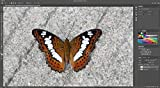 Adobe Photoshop   Photo, Image, and Design Editing