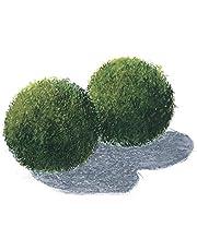 3 boules de mousse, Aquarium 4-6cm, Cladophora aegagrophila