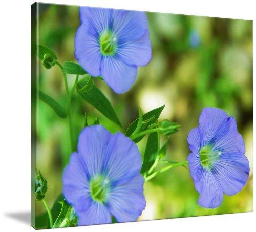 Blue Flax Flower (Giclee Art Print), Capturing Nature