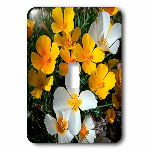 Danita Delimont - Flower - White Poppies bloom in the Sonoran Desert, Tucson, Arizona - Light Switch Covers - single toggle switch - Tucson In Outlets