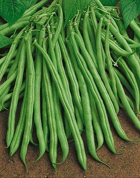Tendergreen Bush Bean Seeds - Packet