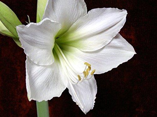 blooming bulbs - 8