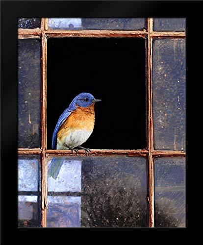 Bluebird Window 15x18 Framed Art Print by Vest, Chris