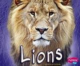 Lions, Catherine Ipcizade, 1429612487