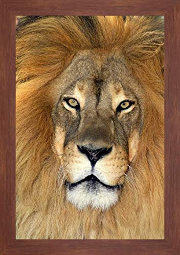CA, Los Angeles Co, African Lion by Dave Welling - 24