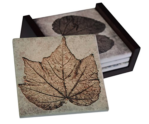 Fossil Plant Images - 4-Piece Sandstone Coaster Set - Caddy Included by Neurons Not Included