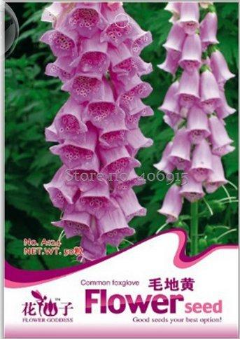 Amazon new beautiful pink foxgloves flower seeds 50 seeds new beautiful pink foxgloves flower seeds 50 seeds mightylinksfo