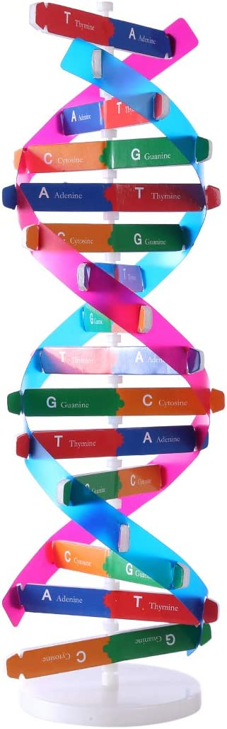 HMANE DNA Models Double Helix Model Components Science Educational Teaching Instrument Toy