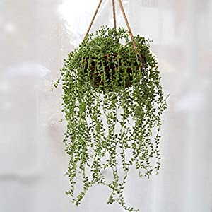 XGao 2pcs Artificial Succulents Beads Simulation Fake Flower Lover Tears Vine Wall Hanging Flowers Orchid Hanging Plants Garland Living Room Balcony Wedding Home Garden Outdoor Decoration (Green) 5