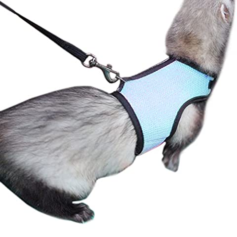 Alfie Pet by Petoga Couture - Jaylin Harness and Leash Set for Small Animals like Guinea Pigs and Rabbits - Color: Blue, Size: (Ferret Harnesses And Leashes)