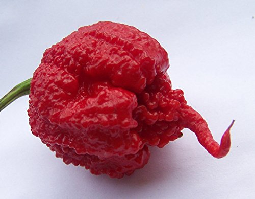 Carolina Reaper Pepper HP22B Worlds Hottest Chile Pepper 2013 Guiness World Record Averages 1,569,300 Scoville