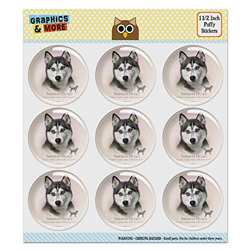 (Siberian Husky Dog Breed 1.5