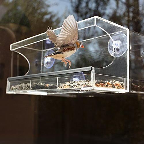 Large Acrylic Window - Gamgee's Garden Large Acrylic Window Bird Feeder With Overhang By Watch Wild Birds Feed- Clear See Through- Removable Sliding Tray- Drain Holes- Heavy Duty Suction Cups- Entertain Pets All Day