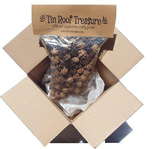 Natural Eastern Hemlock Miniature Pine Cones 250 Count 1/2