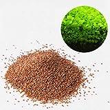 Aquarium Plants Seeds, Cyclamen9 Double Leaf Carpet Water Grass, Aquatic Leaf Carpet for Fish Tank...