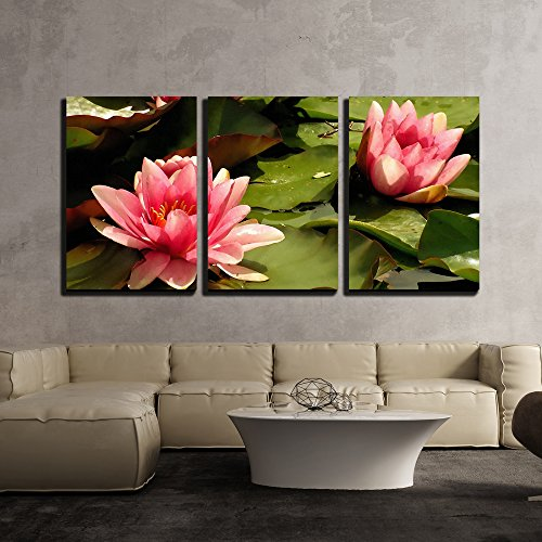Pink Water Lilies - Modern Home Decor Framed