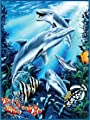 K2 Signature Collection Mink Blanket, Dolphins