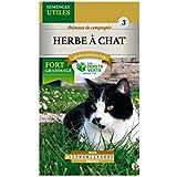 Semence Herbe à Chat