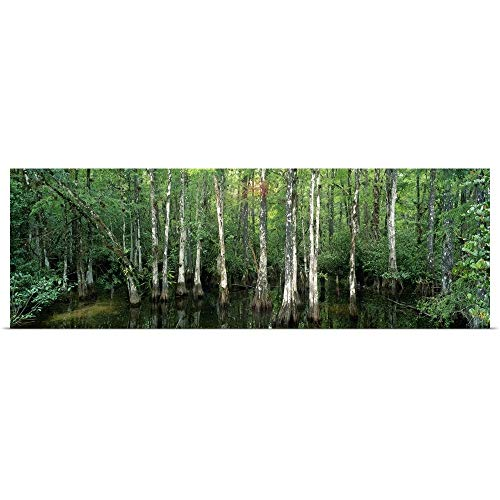 GREATBIGCANVAS Poster Print Entitled Big Cypress Nature Preserve FL by 48