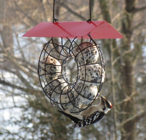 Songbird Essentials SE908 Suet Feeder
