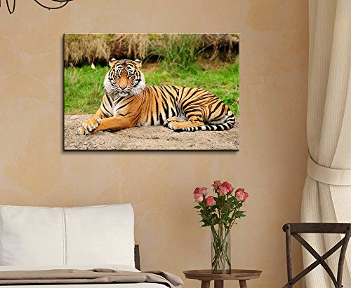 A Royal Bengal Tiger in The Wild Wall Decor