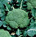 David's Garden Seeds Broccoli Belstar DS2815 (Green) 100 Organic Hybrid Seeds