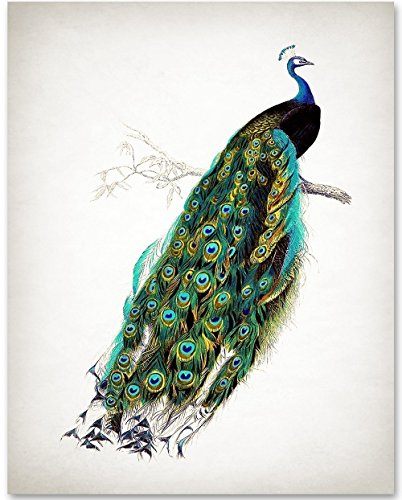 Antique Peacock Art Print- 11x14 Unframed Art Print - Great Gift for Bathroom Decor from Personalized Signs by Lone Star Art