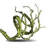 Sequoia Flexible Bend-A-Branch Jungle Vines Pet Habitat Decor for Lizard,Frogs, Snakes and More Reptiles (Fat)