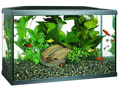 fish tank 10 gallon kit - 1