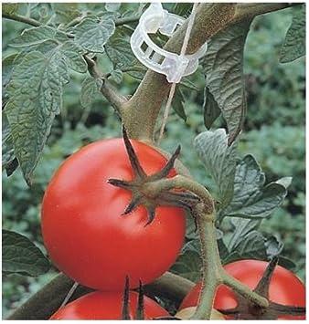 100pcs Vegetable Garden Tomato Trellis Clips