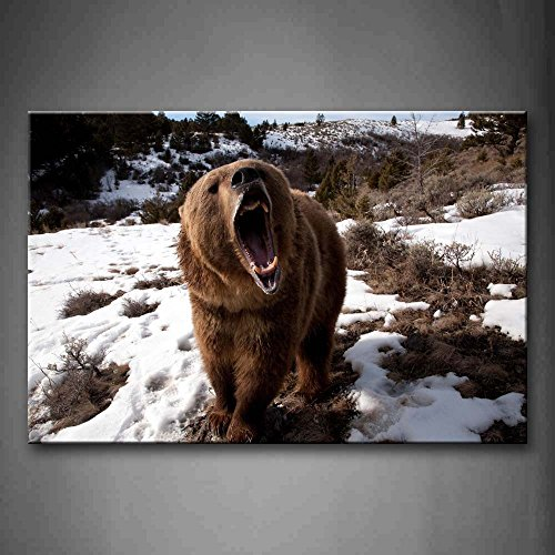 First Wall Art - Brown Bear Open Mouth On Snowfield Grass Tr