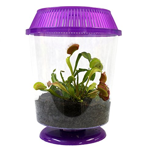 "Nature Gift Store Adult Venus Flytrap in 4.5"" Terrarium -Assorted Color Terrariums, Carnivorous Plant Fly Trap"